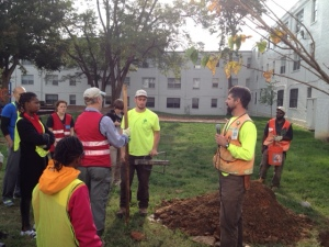 Watching the tool and correct way to plant a tree demonstration before the actual planting got underway.