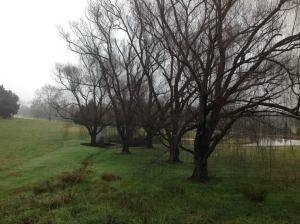 Beautiful Weeping Willows leading towards the golf course.