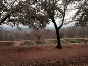 The vegetable gardens at Monticello.